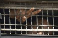 Filistinli tutsaklara destek verin: Açlık grevi dayanışması